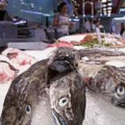 Fresh Fish On The Market Poster