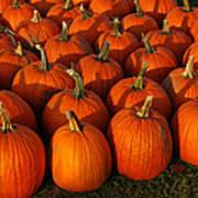 Fresh From The Farm Orange Pumpkins Poster