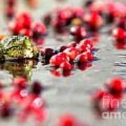 Frog At A Cape Cod Cranberry Bog Poster