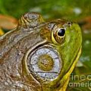 Frog Eye Poster