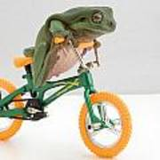 Frog On A Bicycle Poster