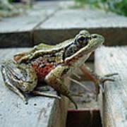 Frog Poster by Sophia Petersen