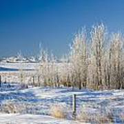 Frost-covered Trees In Snowy Field Poster