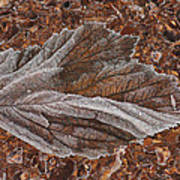 Frosted Raspberry Leaf Poster