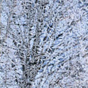 Frosted Tree Poster