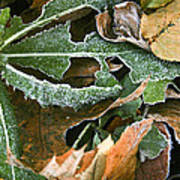 Frosty Leaves II Poster