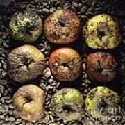 Frozen Apples Poster by Bernard Jaubert