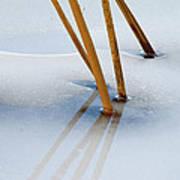 Frozen Lotus Poster