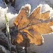 Frozen Oak Leaf Poster