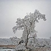 Frozen Tree Poster