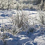 Frozen Winter Landscape Poster