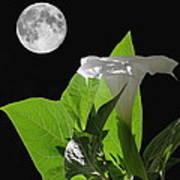 Full Moon Flower Poster