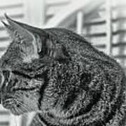 Full Profile Of The Cat - Black-and-white Poster