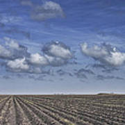 Furrows In A Texas Field Poster