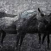 Galloping Stones Poster