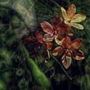 Garden Abstract 6 Poster