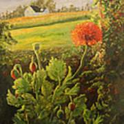 Garden Poppies Poster