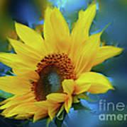 Garden Sun Poster