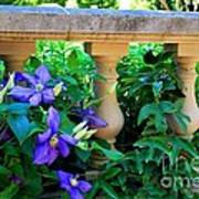 Garden Wall With Periwinkle Flowers Poster