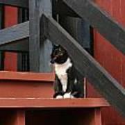 Gatto Bianco Gatto Nero Poster