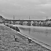Geese Along The Schuylkill River Poster