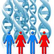 Genetic Sexuality Poster by Victor Habbick Visions