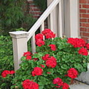 Geraniums On The Steps Poster