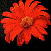 Gerbera Poster by Heather Matthews