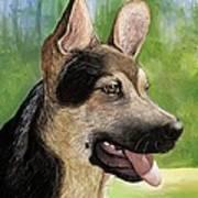 German Shepard Puppy Poster