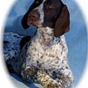 German Shorthaired Pointer 790 Poster
