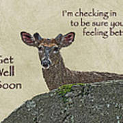 Get Well Card - Whitetail Deer In Velvet Poster