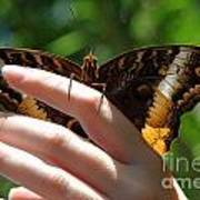 Giant Owl Butterfly In Hand Poster