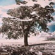 Giant Tree In City Poster