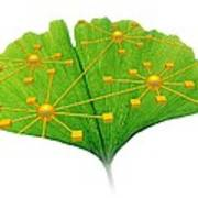 Ginkgo And Network Diagram Poster