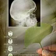 Ginkgo In Medicine Poster