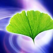 Ginkgo Leaf Poster by Pasieka