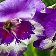 Gladiola Blossom 2 Poster