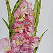 Gladiolas Poster by Patsy Sharpe