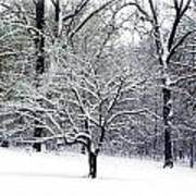 Glenna's Dogwood In The Snow Poster