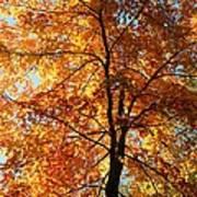 Glory Of Autumn Poster by Jennifer Compton