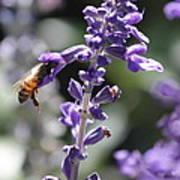 Glowing Bee In Purple Flowers Poster