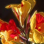 Glowing Iris Poster