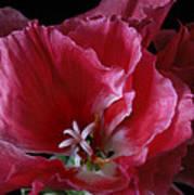 Godieta Flower Detail Poster