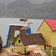 Gold Beach Gulls Poster