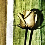 Gold Tulip Poster