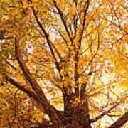 Golden Autumn View Poster