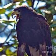Golden Eagle II Poster