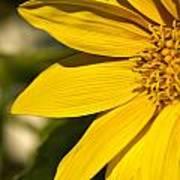 Golden Flower 1 Poster