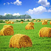 Golden Hay Bales In Green Field Poster by Elena Elisseeva