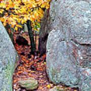 Golden Oak Through Boulders At Elephant Rocks State Park Poster